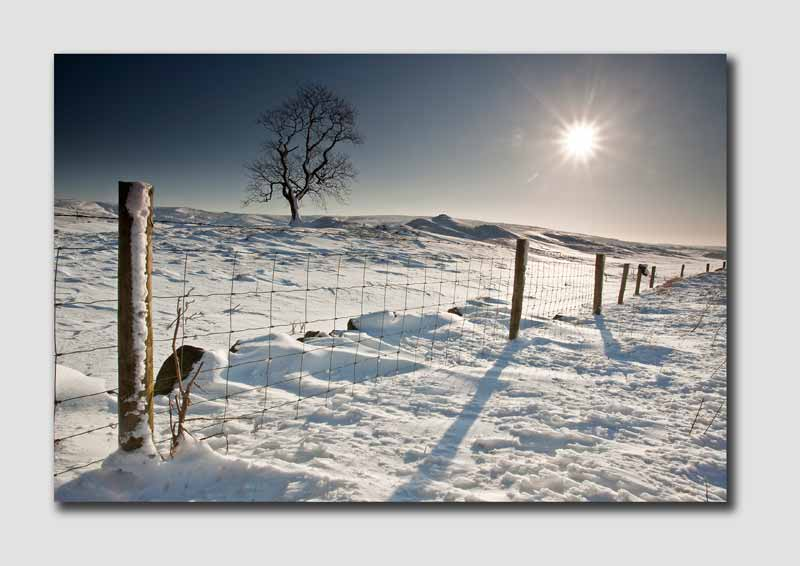 Snowfall and Sunlight - SS3968
