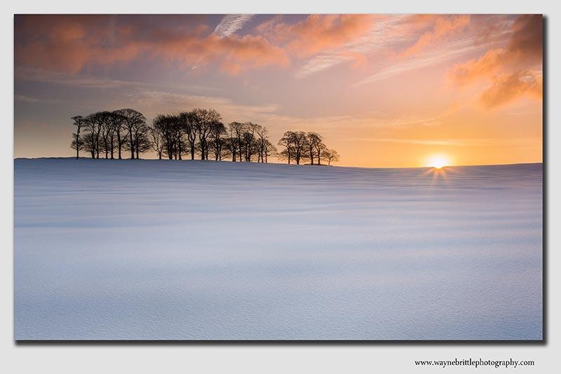 Snowy tree copse at dawn - 37997