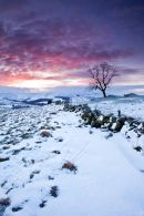 Staffordsire Moorland Winter Dawn  -2 - 3859