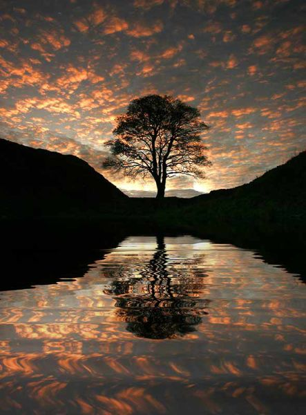 The Sycamore Gap 'Reflection' - NP103