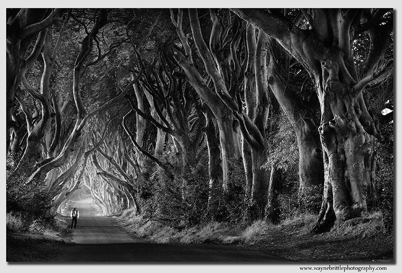 The-Dark-Hedges-Road----Headless-Photographer---B&W-----W5D33855