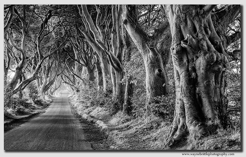 The-Dark-Hedges-Road---B&W---W5D33836