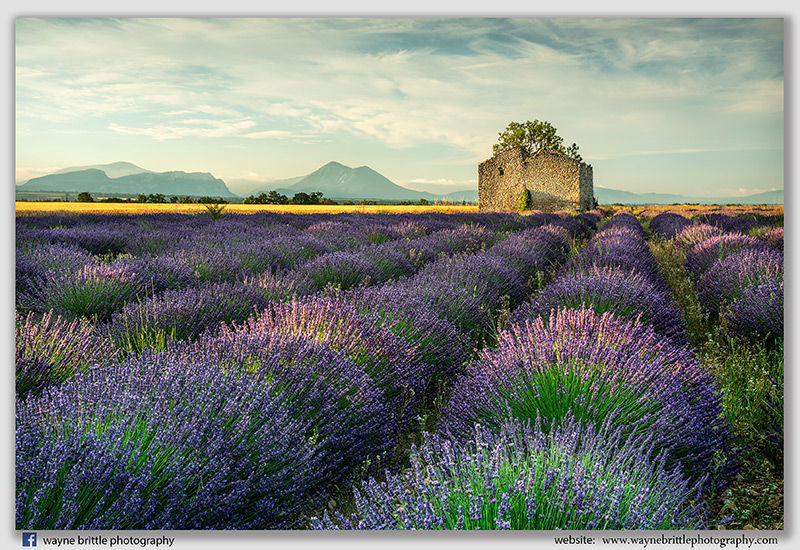 Mountains, Ruins & Lavender Fields - W5D43834