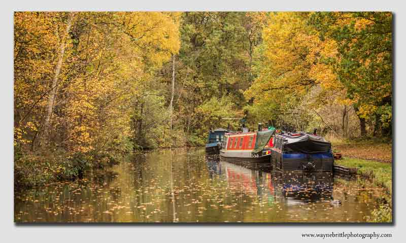 Trent and Mersey canal in Autumn - Staffordshire - SSW5D337216