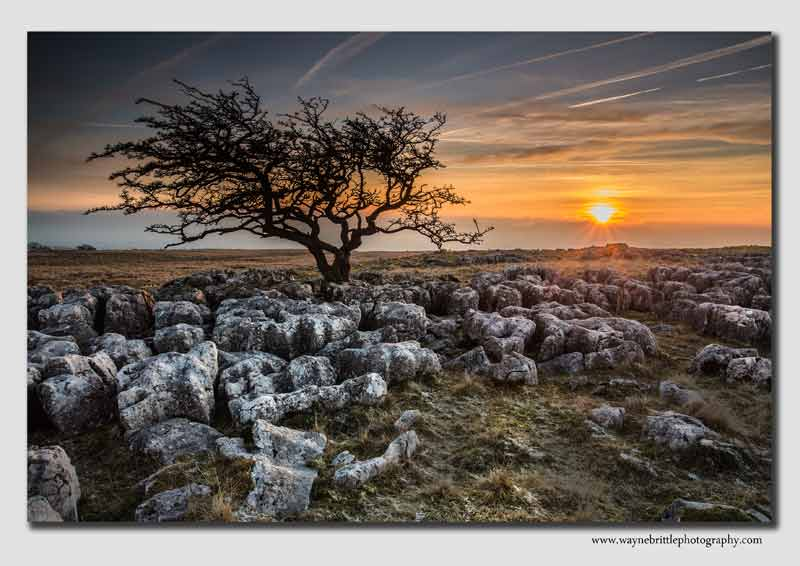 Twistleton Tree Sunset - W5D37835