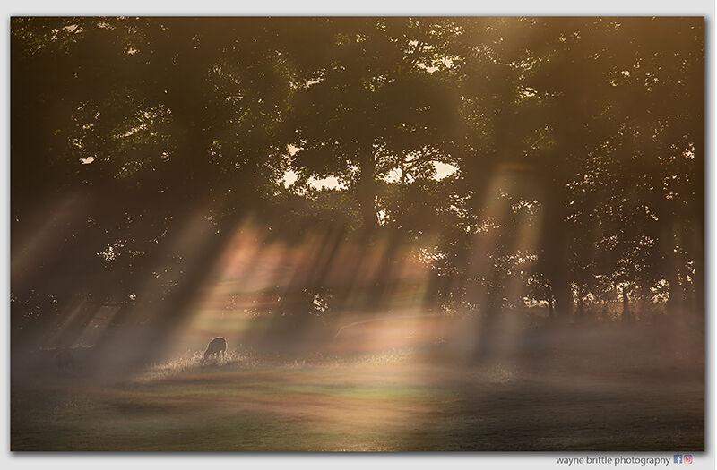 Surreal morning light - 2n - W5D44153
