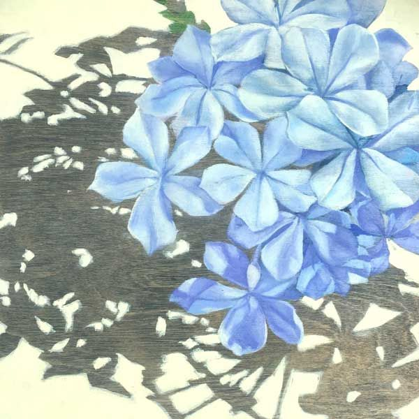 Plumbago on the roof