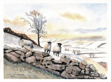 Winter North Yorkshire Dales