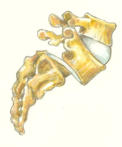 Spinal detail