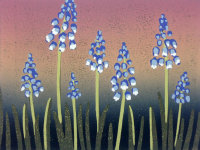 A Crush of Grape Hyacinths