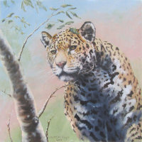 Focus (Jaguar)