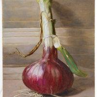 Onion by Nicola Smith