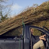 Loaded Truck of Willow
