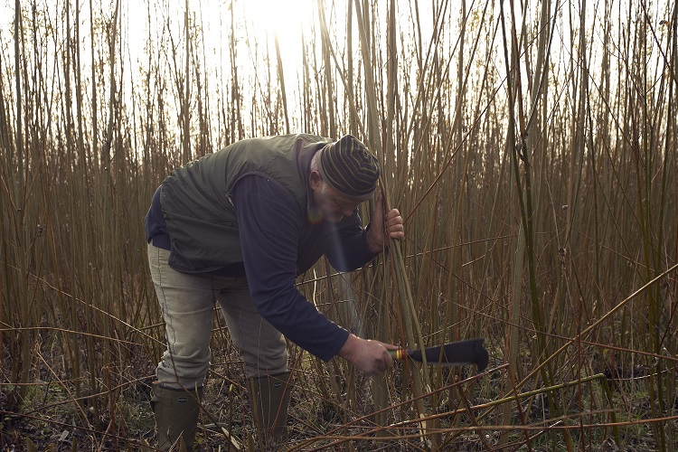 Baz Scampion Cutting Willow by Hand