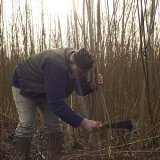 Cutting Willow with a Billhook