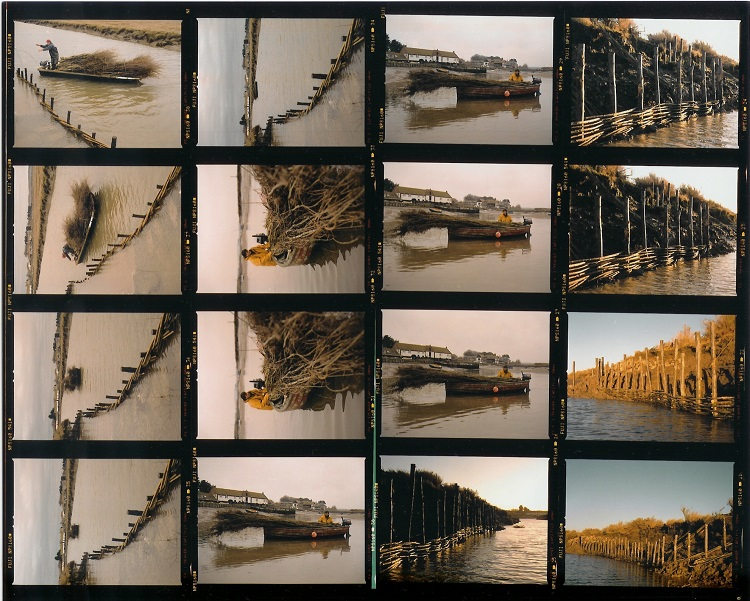 Burnham Willow Contact Sheet Work at Overy Staithe