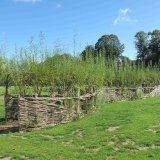 Living Willow Arch/Tunnel  for Norwich City Council by Burnham Willow