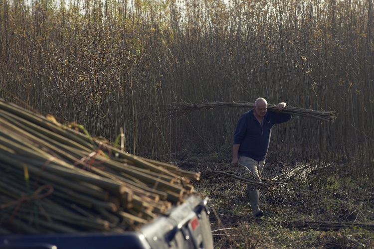 Baz Scampion Working in the Burnham Willow Beds
