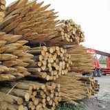 Delivery of Sustainably grown Chestnut posts