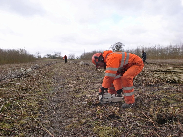 Burnham Willow Cutting and Stacking whilst managing the Willow Bed