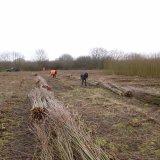 Burnham Willow Cutting and Stacking