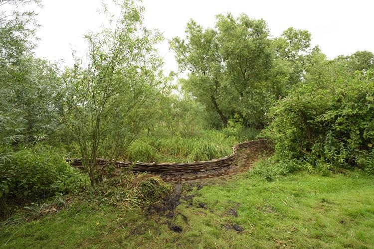 Burnham Willow Erosion Management