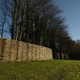 Burnham Willow  Fencing at Weybourne Abbey