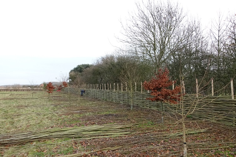 Willow Fence: a work in progress Burnham Market Norfolk
