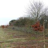 Willow Fence: a work in progress Burnham Market Norfolk