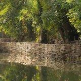 Burnham Willow Erosion Management on the River Wensum Norwich