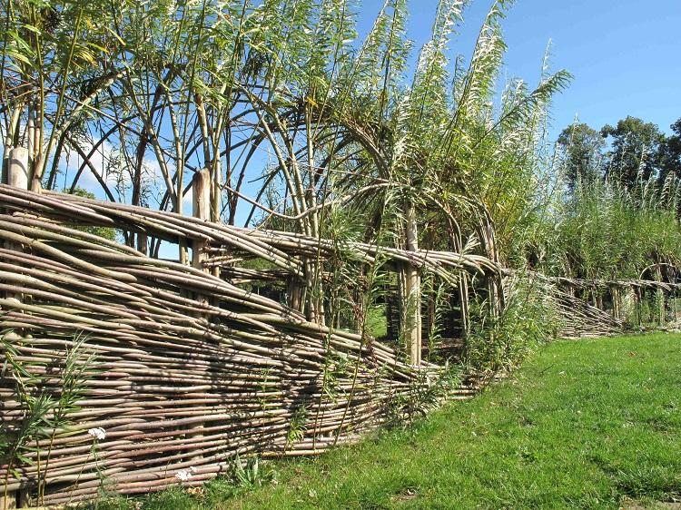 A Burnham Willow, Living Willow Tunnel Norwich Norfolk