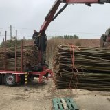 Burnham Willow Delivery of  harvested Willow to the Yard