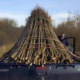 Burnham Willow with a full load in the Willow Bed
