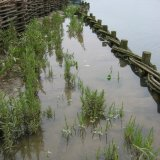 Erosion Control Structure by Burnham Willow at Burnham Overy Staithe