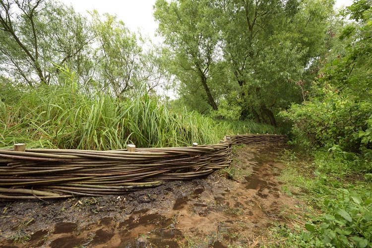 Burnham Willow Erosion Management
