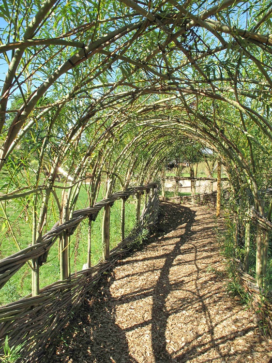 An intricate Living Willow Tunnel for Norwich City Council