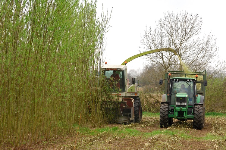 Mechanical Cutting of Willow