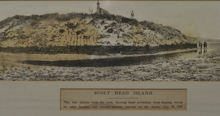 Erosion management on Scolt Head using Willow hurdles in 1928