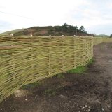 Burnham Willow and the Greenhouse Project Sherringham