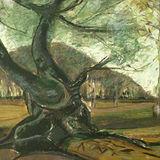 Captain's Wood Oak