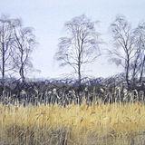 Grassland Birches