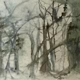 Trees Panoramic