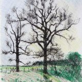 Winter trees, Ickworth. Pen and watercolour pencil 10x15cm