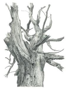 James Heyworth Ickworth tree
