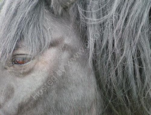 Old Horse Portrait