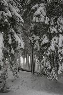 Snowy 3D