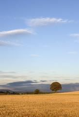 Harvest Time Near Thirsk