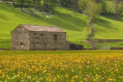 Swaledale Barn & Meadow