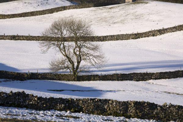 Fields & Tree