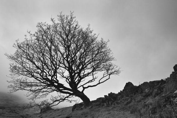 Tree on hillock
